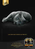 Sheba: What Cats Want