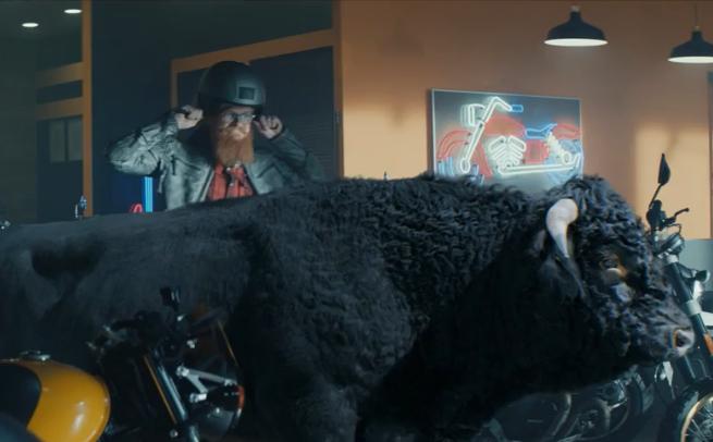Byk chwycony z rogi reklamuje kredyt w BGŻ BNP Paribas (wideo)