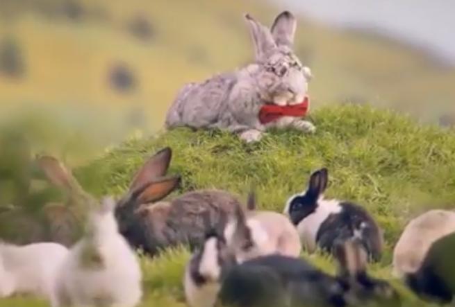Króliki w rządowej kampanii promują zdrowy styl życia dla większej dzietności (wideo)