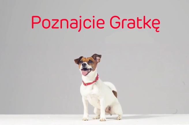 Pies Gratka szuka w kampanii serwisu Gratka.pl (case study)