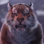 Tygrysek-Sokół reklamuje Tigera na koncercie i wakacjach (wideo)
