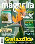 Magnolia - 2017-11-09