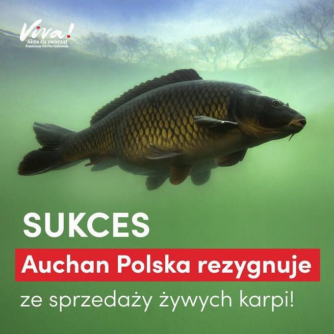 Czy możesz podłączyć dużo ryb