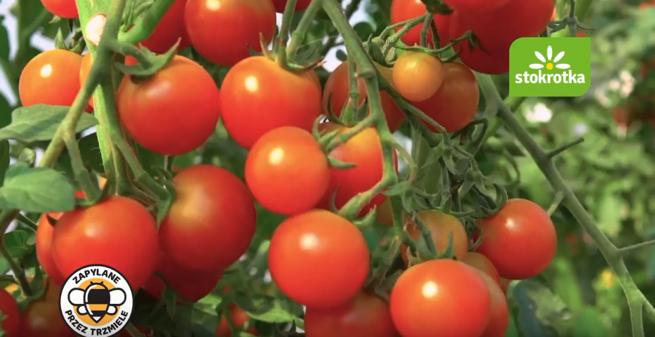 Jak sadzić pomidory i je uprawiać w ogrodzie | Westwing